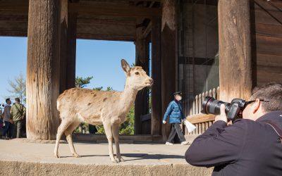 Japan: Part 2: Kyoto, Nara and Osaka